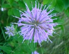 wildflowers-2006